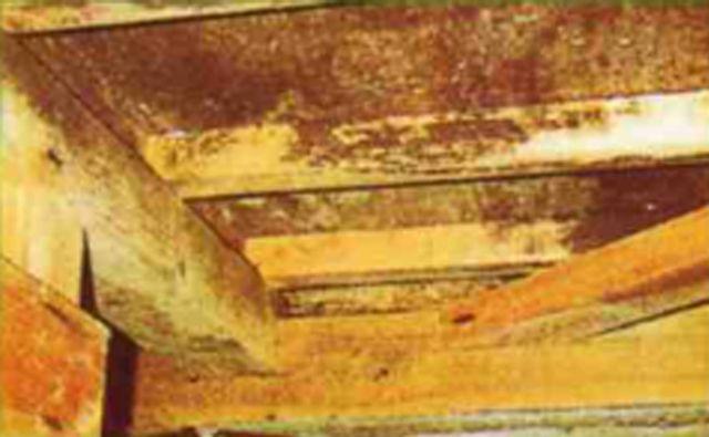 termite-prevention01